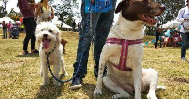 En simulacro distrital de evacuación las personas deben incluir a sus mascotas